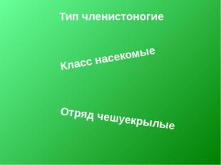 Тип членистоногие Класс насекомые Отряд чешуекрылые