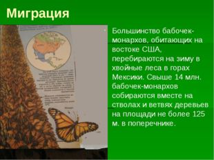 Миграция Большинство бабочек-монархов, обитающих на востоке США, перебираются