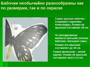 Бабочки необычайно разнообразны как по размерам, так и по окраске Самая крупн
