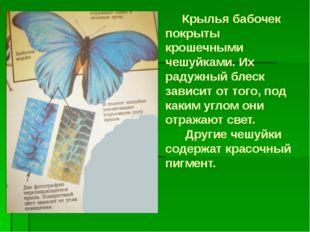 Крылья бабочек покрыты крошечными чешуйками. Их радужный блеск зависит от то