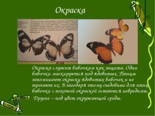 Окраска Окраска служит бабочкам как защита. Одни бабочки маскируются под ядов