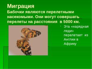 Миграция Бабочки являются перелетными насекомыми. Они могут совершать перелет