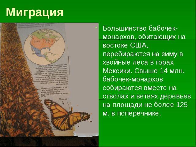 Миграция Большинство бабочек-монархов, обитающих на востоке США, перебираются...