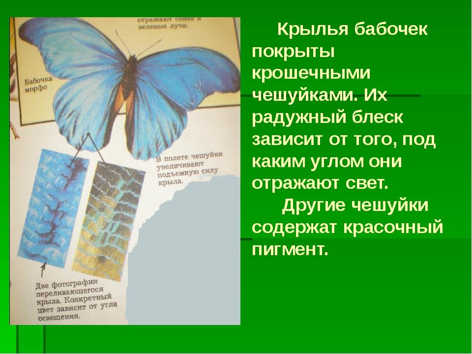 Крылья бабочек покрыты крошечными чешуйками. Их радужный блеск зависит от то...