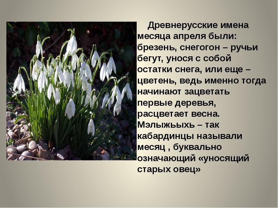 Древнерусские имена месяца апреля были: брезень, снегогон – ручьи бегут, уно...