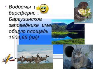 Водоемы в биосферном Баргузинском заповеднике имеют общую площадь 1504,65 (г