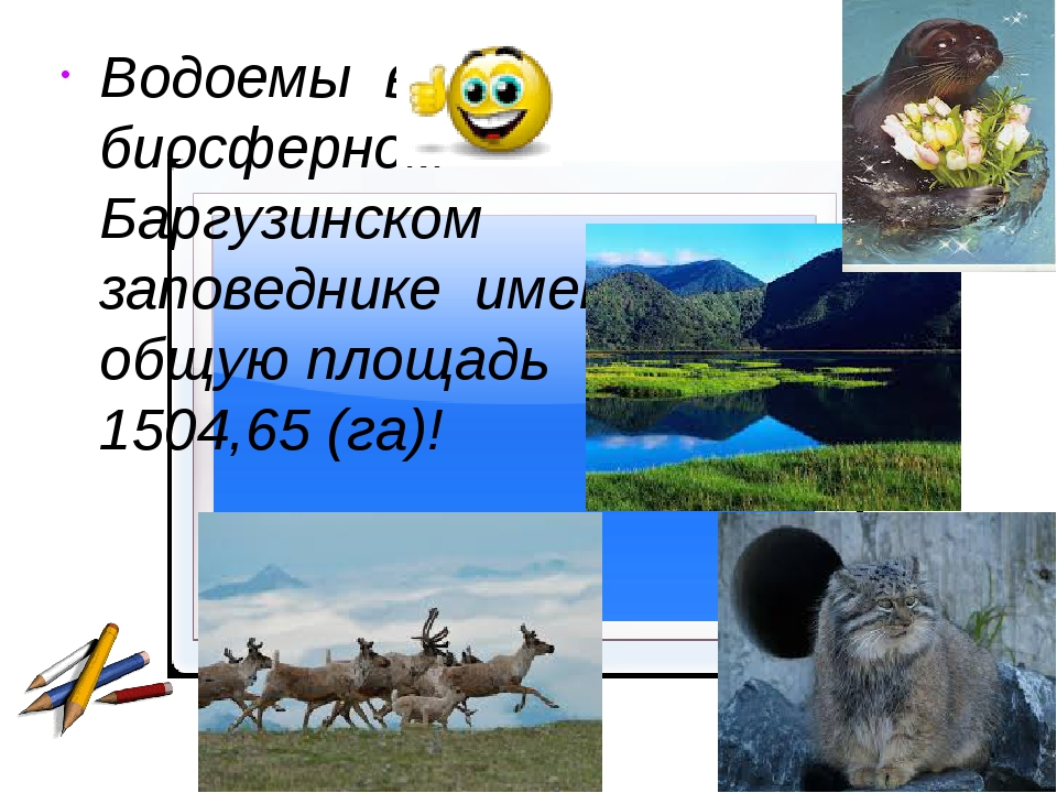 Водоемы в биосферном Баргузинском заповеднике имеют общую площадь 1504,65 (г...