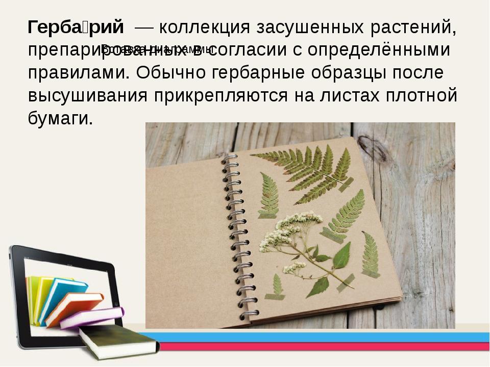 Герба́рий — коллекция засушенных растений, препарированных в согласии с опре...
