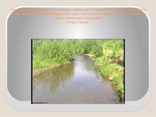 Однажды на экскурсии на маленькую лесную речку Покап (возле пос. Косья), ребя