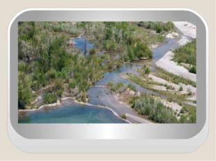 Вид на бобровые плотины с вертолета.