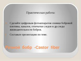 Речной бобр -Castor fiber  Практическая работа: Сделайте цифровым фотоаппара