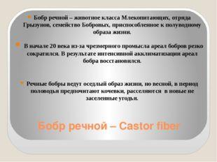 Бобр речной – Castor fiber Бобр речной – животное класса Млекопитающих, отряд