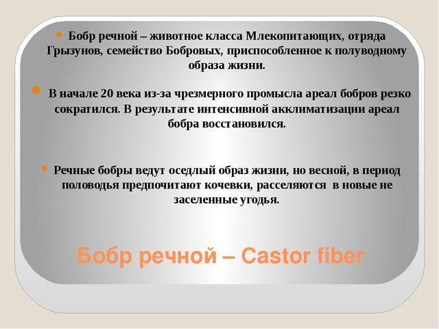 Бобр речной – Castor fiber Бобр речной – животное класса Млекопитающих, отряд...