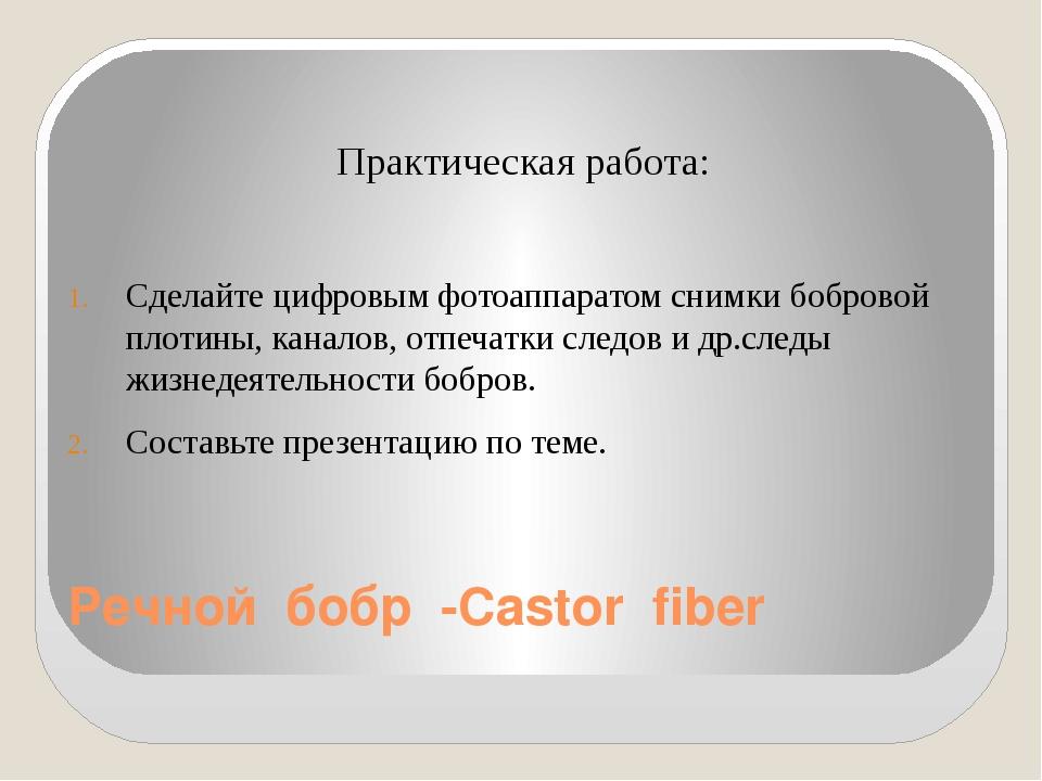 Речной бобр -Castor fiber  Практическая работа: Сделайте цифровым фотоаппара...