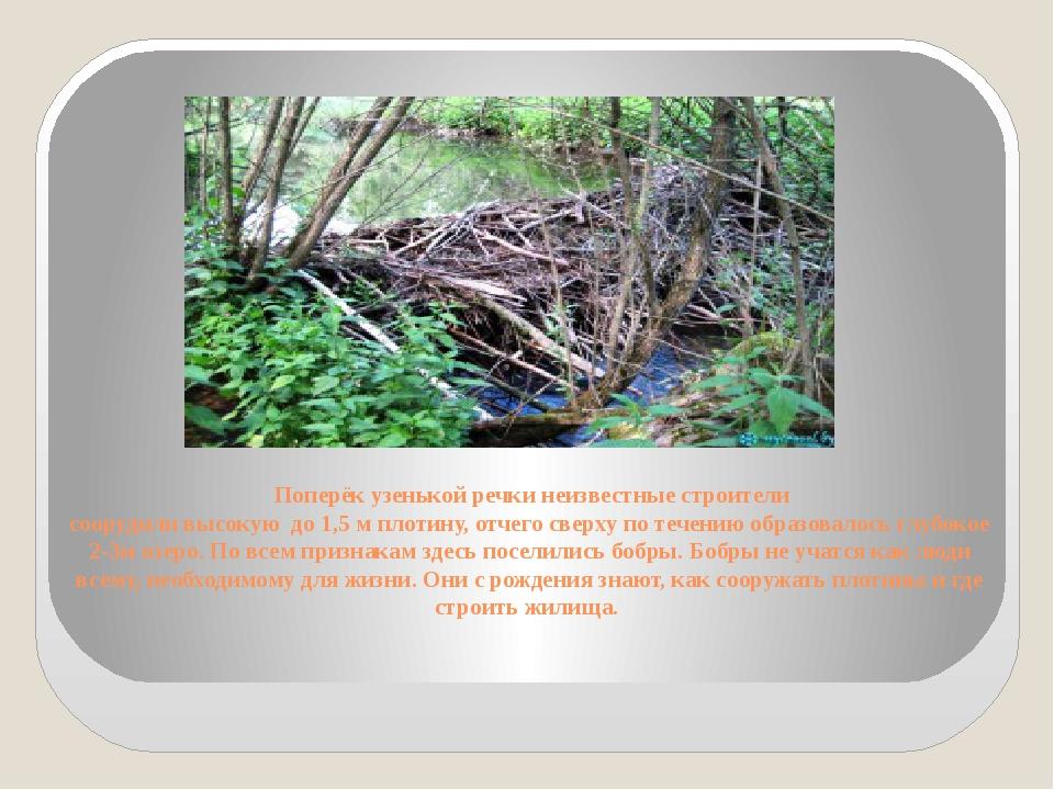 Поперёк узенькой речки неизвестные строители соорудили высокую до 1,5 м плот...