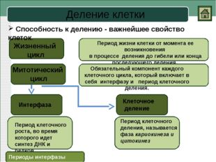 Митоз Телофаза Анафаза Метафаза Профаза Процесс непрямого деления соматически
