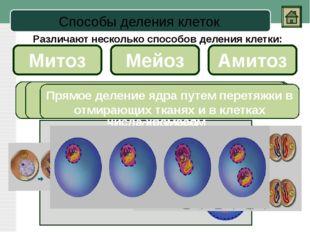 Мейоз Первое деление Второе деление Это особый вид деления клетки, при которо