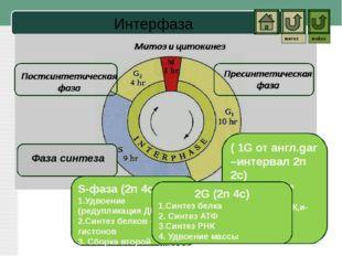 Мейоз Второе деление (особенности) Профаза II Метафаза II Анафаза II Телофаза