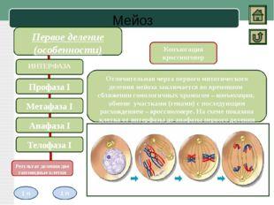 Биологическое значение Митоз Амитоз Мейоз Строгое распределение хромосом меж