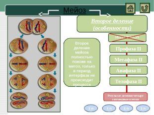 Амитоз Амитоз- прямое деление ядра, то есть деление клеточного ядра без обра
