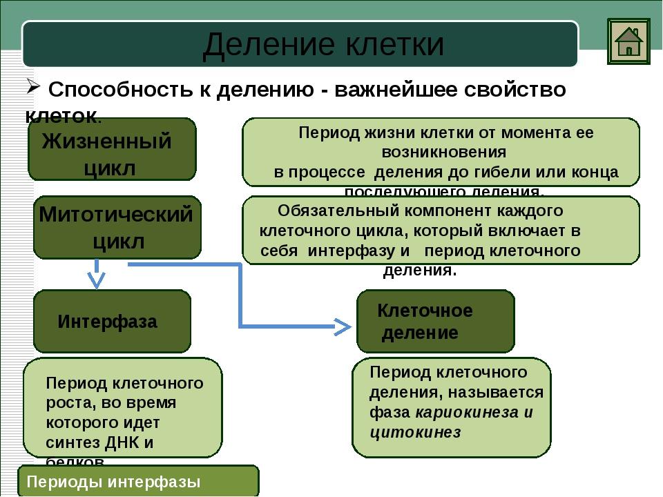 Митоз Телофаза Анафаза Метафаза Профаза Процесс непрямого деления соматически...