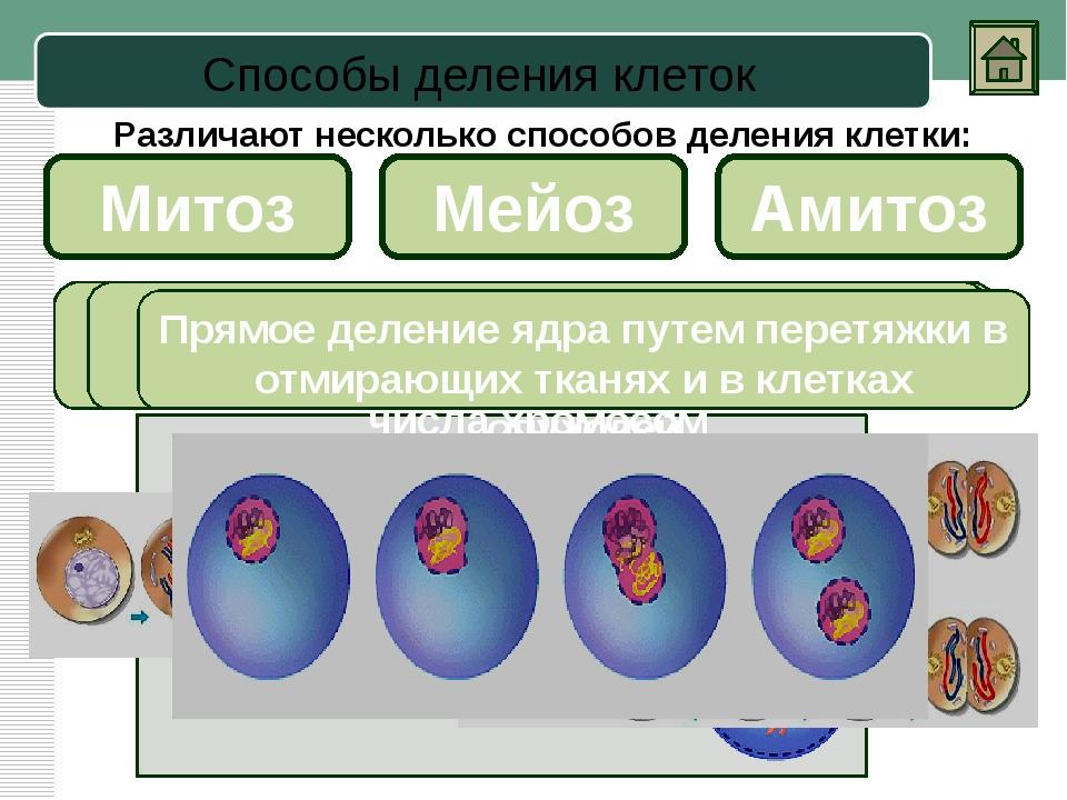 Мейоз Первое деление Второе деление Это особый вид деления клетки, при которо...
