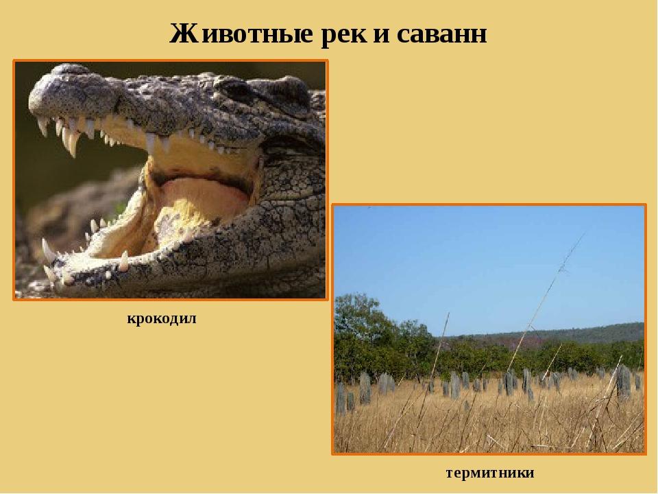 Животные рек и саванн крокодил термитники