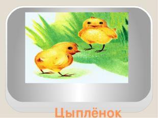 Цыплёнок