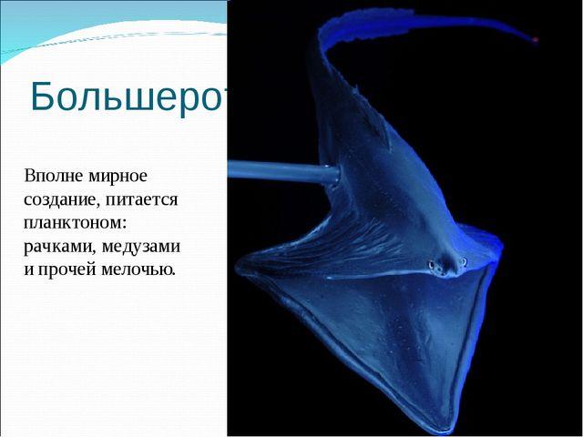 Большерот Вполне мирное создание, питается планктоном: рачками, медузами и пр...