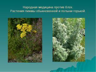 Народная медицина против блох. Растения пижмы обыкновенной и полыни горькой.