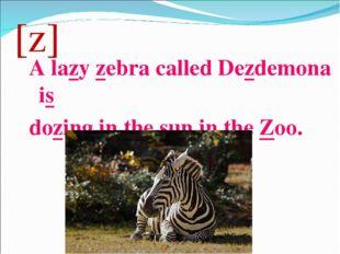 [z] A lazy zebra called Dezdemona is dozing in the sun in the Zoo.