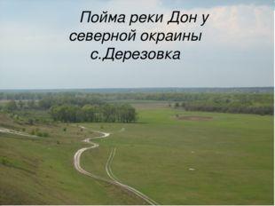 Пойма реки Дон у северной окраины с.Дерезовка