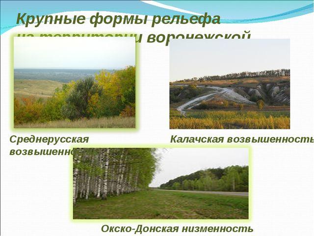 Крупные формы рельефа на территории воронежской области Среднерусская возвыше...
