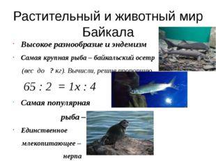 Ценное дерево Байкальской тайги – кедр. Решив пропорцию, вы узнаете возраст