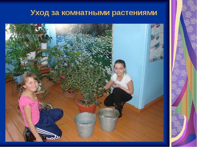 Уход за комнатными растениями