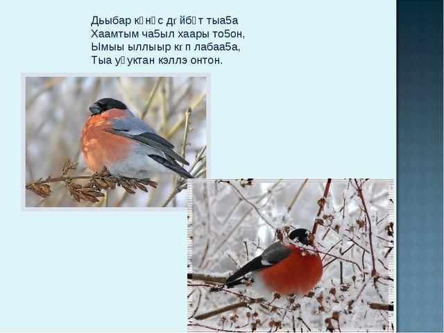 Дьыбар күнүс дѳйбүт тыа5а Хаамтым ча5ыл хаары то5он, Ымыы ыллыыр кѳп лабаа5а,...