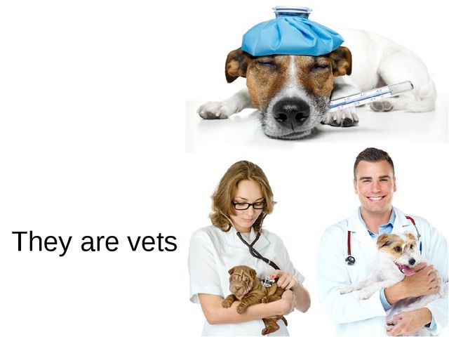 They are vets