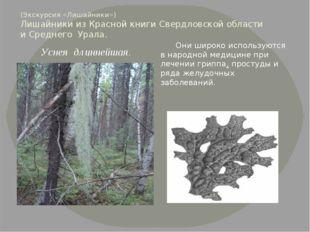 (Экскурсия «Лишайники») Лишайники из Красной книги Свердловской области и Сре