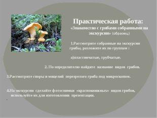 Практическая работа: «Знакомство с грибами собранными на экскурсии» (образец