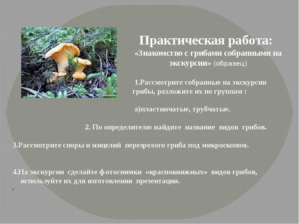 Практическая работа: «Знакомство с грибами собранными на экскурсии» (образец...