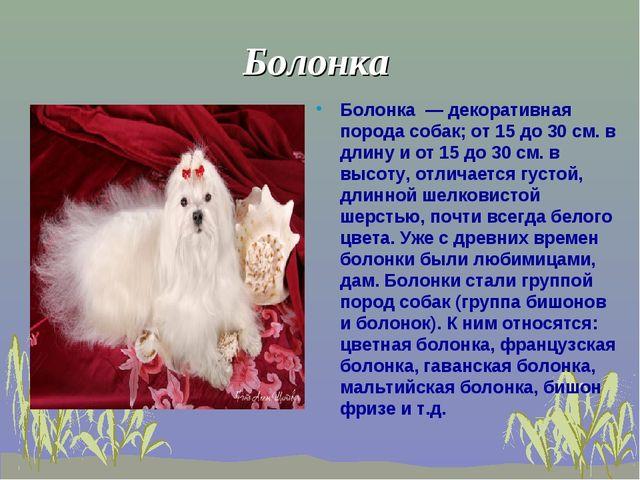 Болонка Болонка — декоративная порода собак; от 15 до 30 см. в длину и от 15...