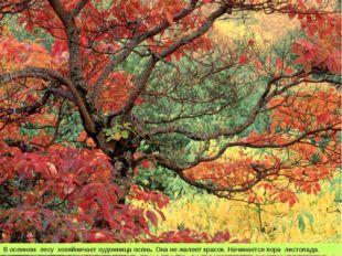 В осеннем лесу хозяйничает художница осень. Она не жалеет красок. Начинается