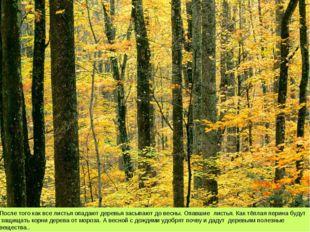 После того как все листья опадают деревья засыпают до весны. Опавшие листья.