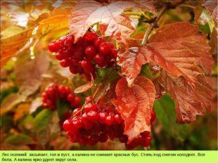 Лес осенний засыпает, гол и пуст, а калина не снимает красных бус. Степь под