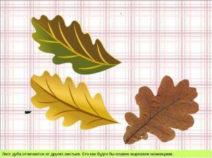 Лист дуба отличается от других листьев. Его как будто бы плавно вырезали ножн
