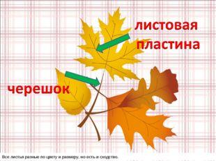 Все листья разные по цвету и размеру, но есть и сходство.