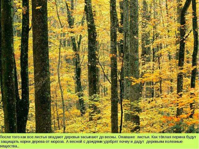После того как все листья опадают деревья засыпают до весны. Опавшие листья....