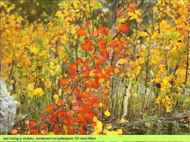 листопад у осины начинается примерно 19 сентября