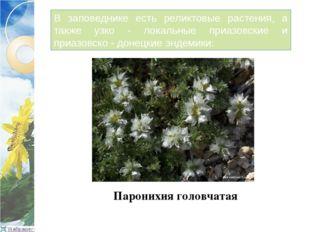 В заповеднике есть реликтовые растения, а также узко - локальные приазовские