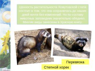 Ценность растительности Хомутовской степи состоит в том, что она сохранилась